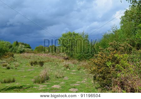Open heathland in rural England.