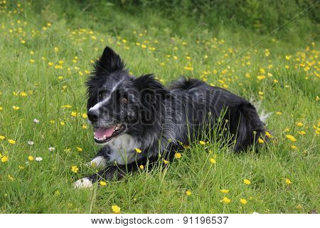 Happy amongst the buttercups