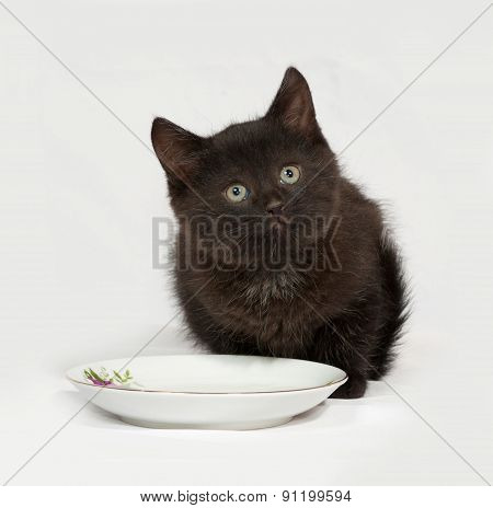 Black Kitten Sitting Next To Saucer Of Milk On Gray