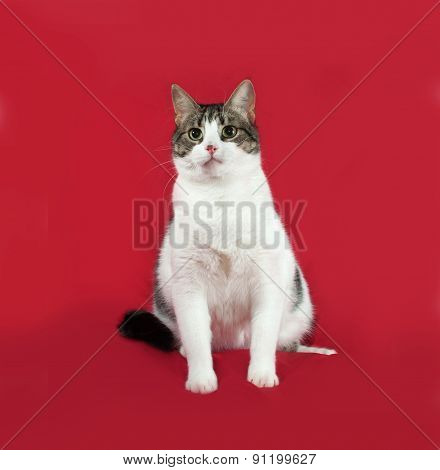 Tabby And White Cat Is Sitting On Red