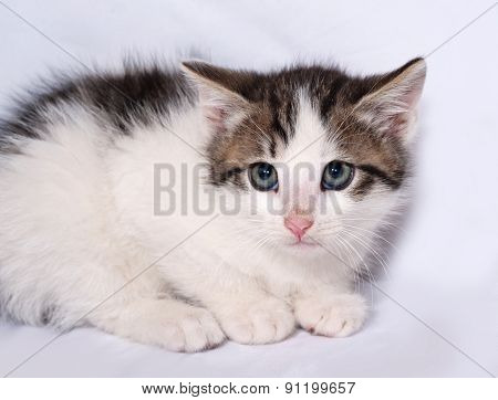 White And Striped Kitten Lying On Gray