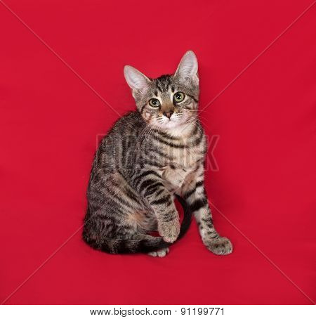 Small Striped Kitten Sitting On Red