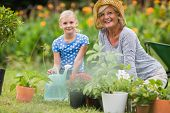 picture of grandmother  - Happy grandmother with her granddaughter gardening on a sunny day - JPG