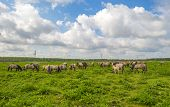 pic of herd horses  - Herd of horses in nature under a blue cloudy sky in spring - JPG