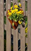 stock photo of wooden basket  - Garden Pansy Decorations in a Basket on a Wooden Picket Fence - JPG