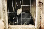 image of cony  - Black rabbit sitting in cell - JPG