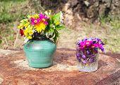 picture of wildflower  - Wildflowers in vases outdoors - JPG