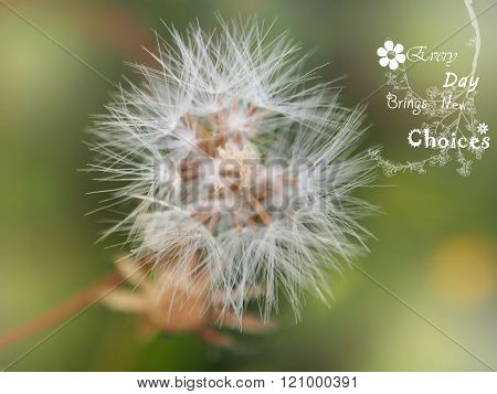 dandelion fluff spring green background, blurred background