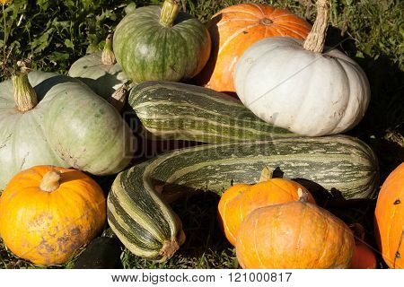 Harvest Of Pumpkin And Vegetable Marrows