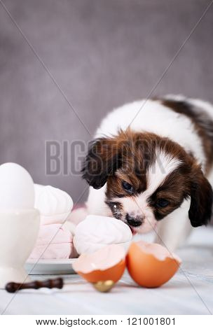 dog eating marshmallows