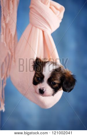puppy hanging in fabric