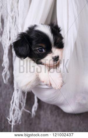 portrait of  puppy