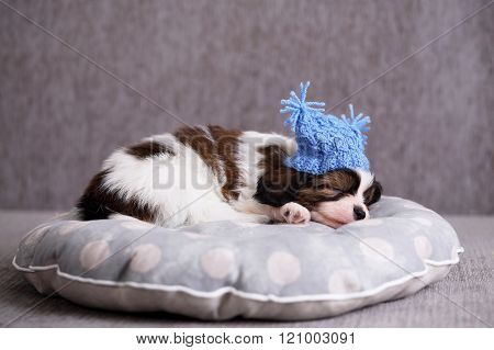 puppy sleeps on a pillow
