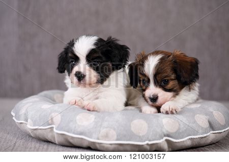 Portrait of puppies