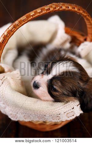 puppy , gift in a basket