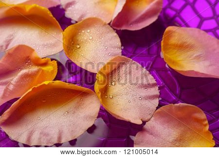 Pink rose petals in purple bowl with water, close up