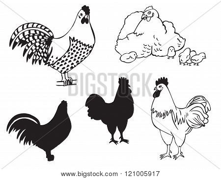 Cocks And Hen With Chickens