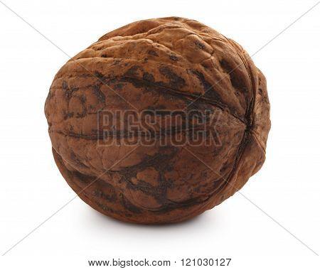 Whole Shelled Walnut