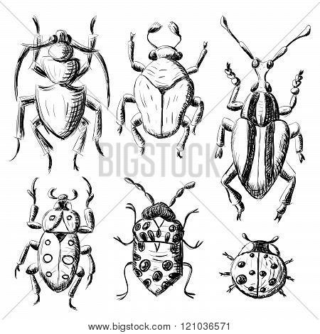 Hand drawn sketch beetles set insects isolated on white