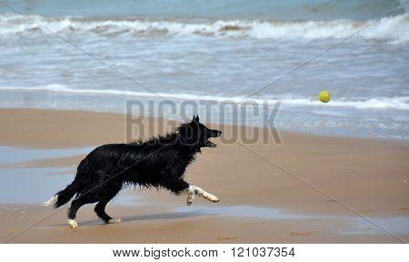 Ball Chaser