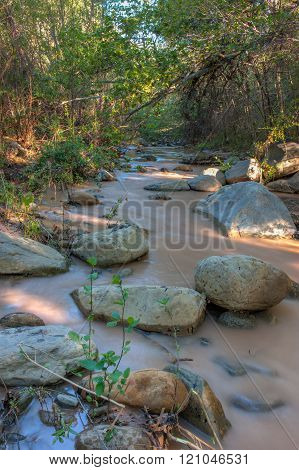 Flowing water under the trees