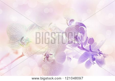 Beautiful orchid flowers. Blurred purple delicate floral background