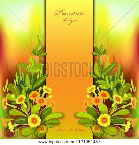 Orange yellow primroses