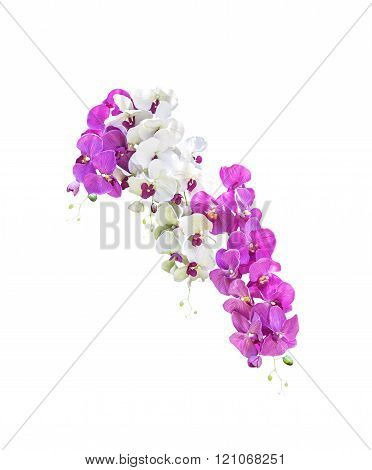 White And Pink Orchid Flowers Isolated