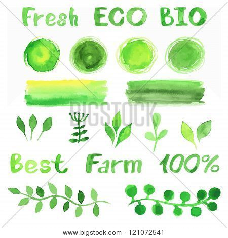 Set of watercolor organic bio backgrounds spots font logo. Watercolor organic bio natural design elements for logo or any your project. Vintage vector watercolor set in green colors.