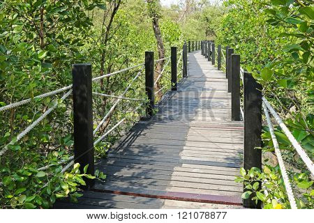 Simple walkway made of wooden path and rope surrounded by tropical Mangrove forest. Peaceful place to study coastal swamp and ecology.