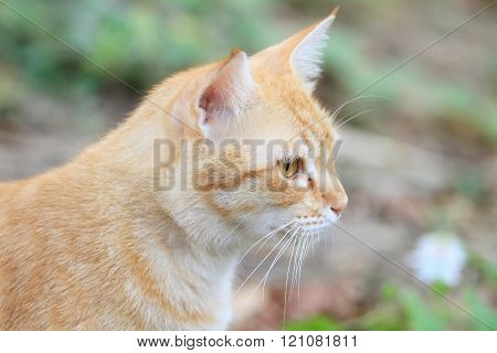 yellow cat looking out