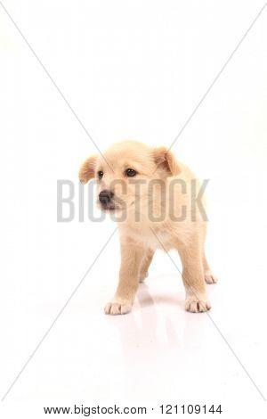 man best friend, beautiful dog
