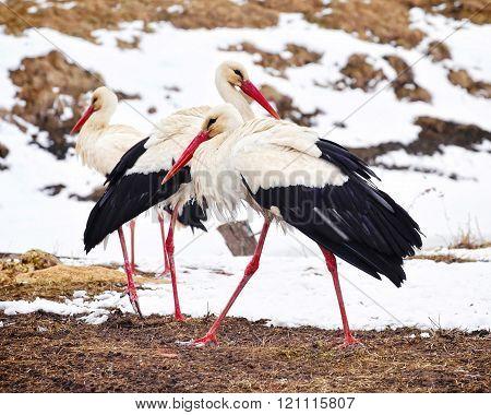 Beautiful Stork At The Park Outdoors