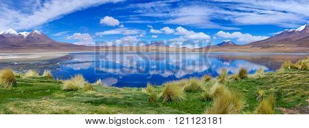 Pink Flamingo In Lake Hedionda , Bolivia.  Panorama