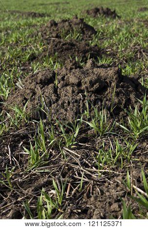 Earth Mounds Are Dug Mole