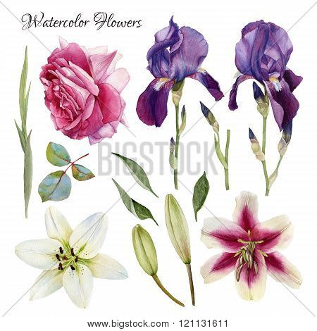 Flowers set of hand drawn watercolor lilies, iris, rose and leaves