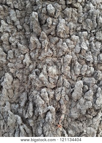 close up dry soil on anthill texture
