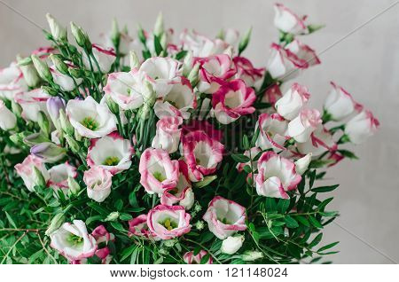 Beautiful romantic bouquet of pink and white eustoma flowers macro on a white background