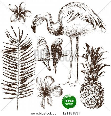 Set of highly detailed hand drawn tropical plants and birds