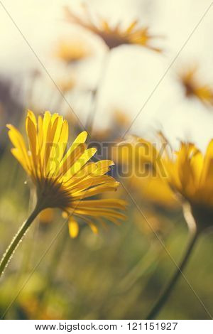 Yellow flowers blossoming in spring time