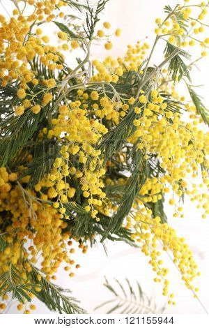 bouquet of Mimosa branches spring bouquet, bouquet of Mimosa