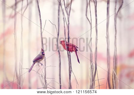 Male and Female of Northern Cardinal