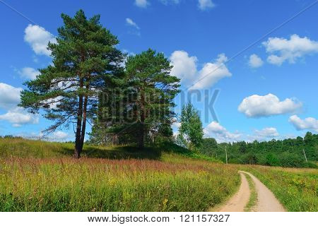 Beautiful Summer Landscape With Road
