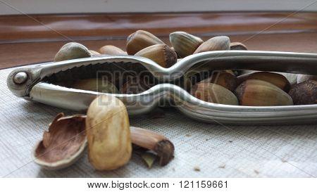 More than a dozen hazelnuts, metal nutcracker and walnut peeled