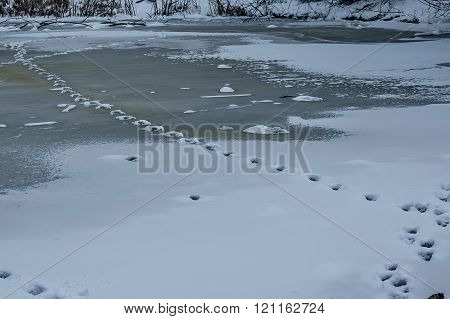 Track from animal in frozen pond