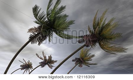 Palmas en huracán