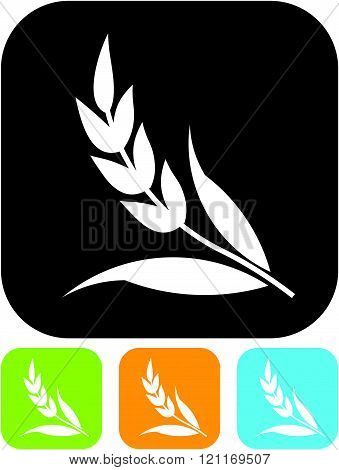 Ear of wheat cereal - Vector icon isolated