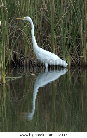 Reflecting Heron