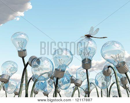 bulb field