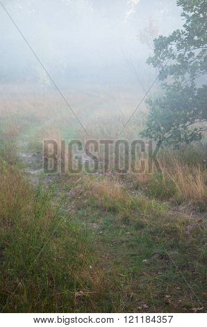 Summer Trail Disappearing Into The Fog